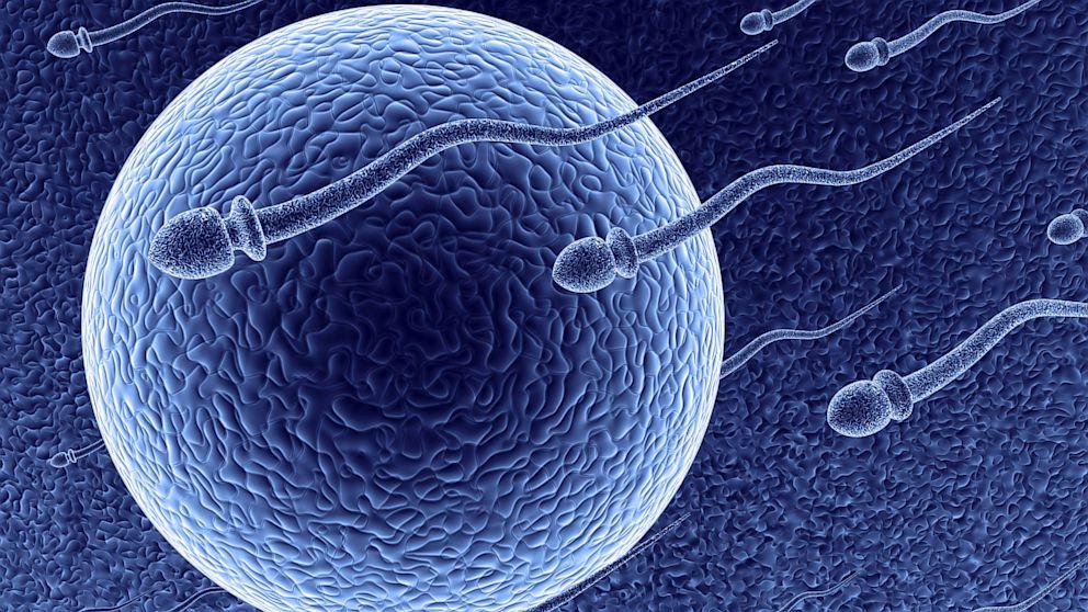 Los Tratamientos De Reproducción Asistida. ¿En Qué Consisten?