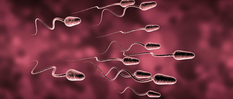 La infertilidad masculina