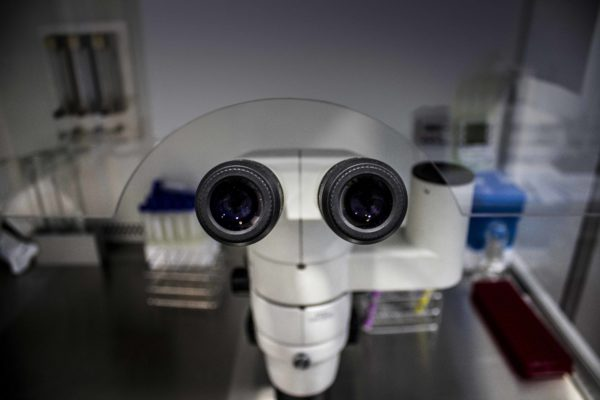Lupa binocular insertada en campana de flujo laminar