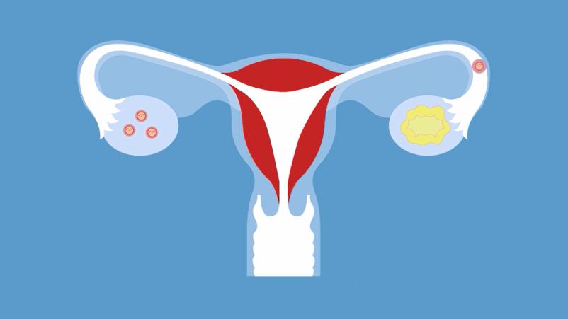 El ciclo menstrual
