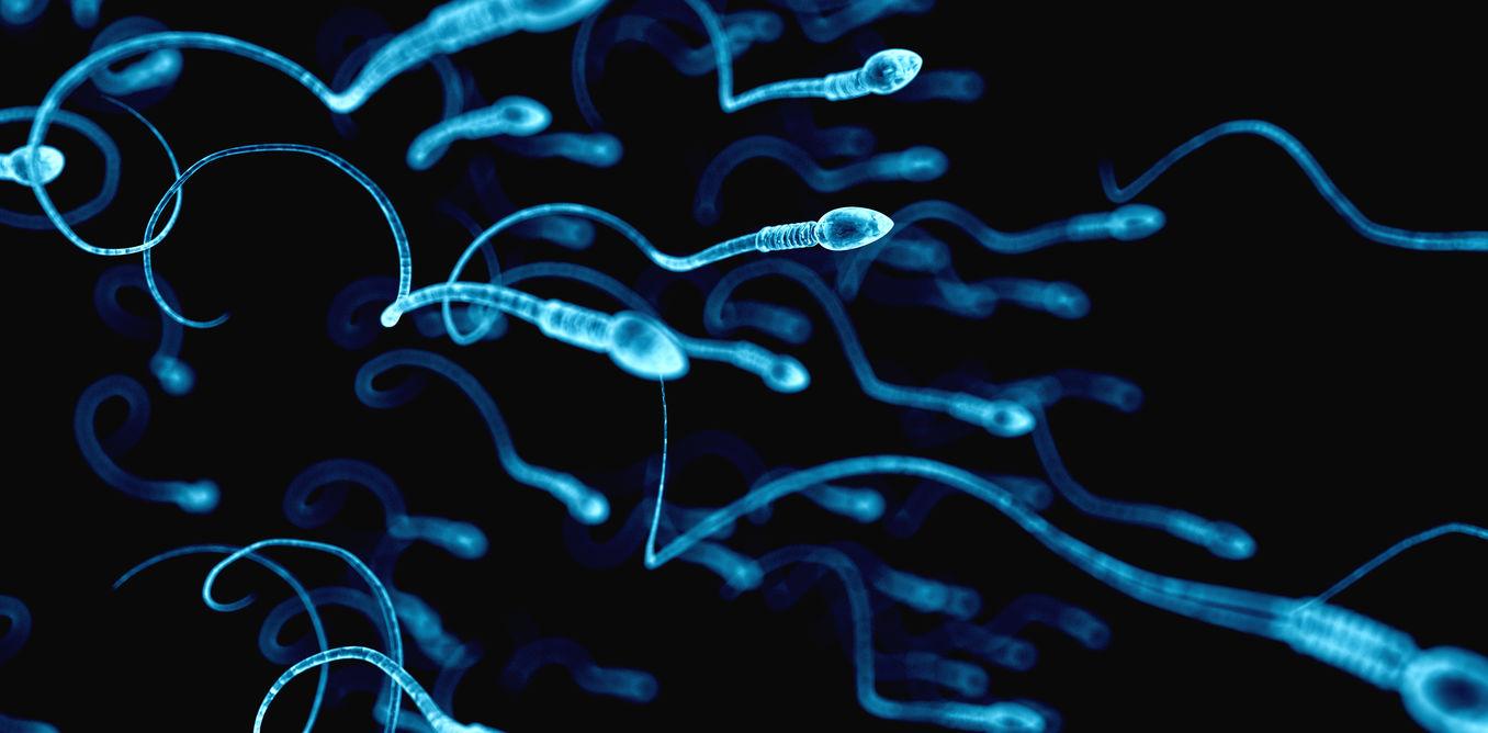 La disminución de la calidad espermática
