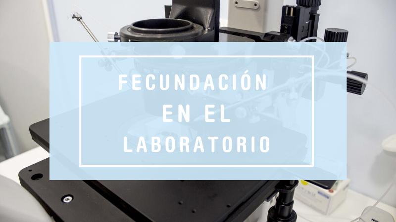 Fecundación en el laboratorio